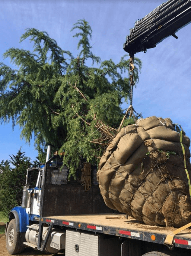 oversized transportation heavy haul trees wide load west coast BC Can Ridge Industries