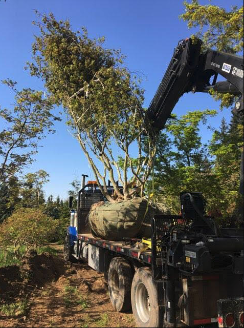 oversized transportation heavy haul wide load trees west coast BC Can Ridge Industries
