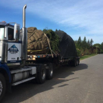 Moving Trees in Greater Vancouver