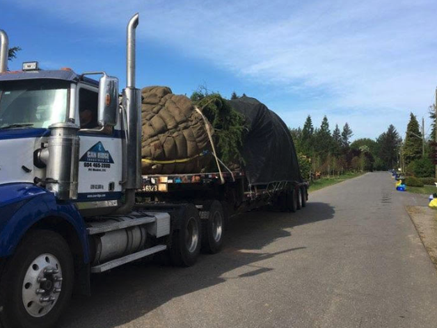 Moving Trees in Greater Vancouver | Can Ridge Moving Solutions
